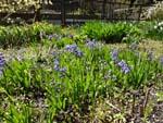 No.6 Hyacinth