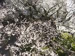 fig.1 white